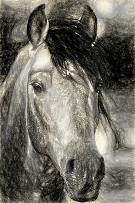 Photograph - Andalusian Portrait by Alice Gipson