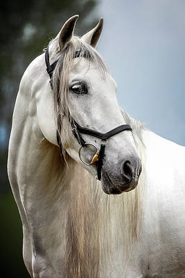 Photograph - Andalusian Profile  by Wes and Dotty Weber
