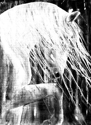 Painting - Andalusian Stallion Black And White by Jani Freimann