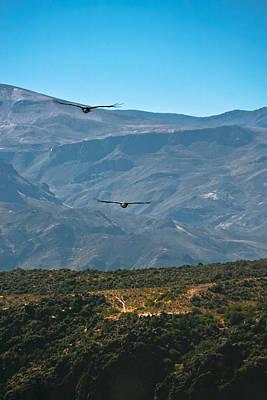 Condor Wall Art - Photograph - Andean Condors 1 by Jonathan Hansen