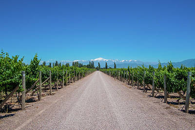 Photograph - Andes View With Vineyard And Road In Mendoza, Argentina by Patrick Duarte Silveira
