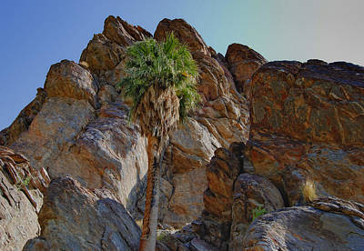 Photograph - Andreas Canyon In Palm Springs by Sandra Selle Rodriguez