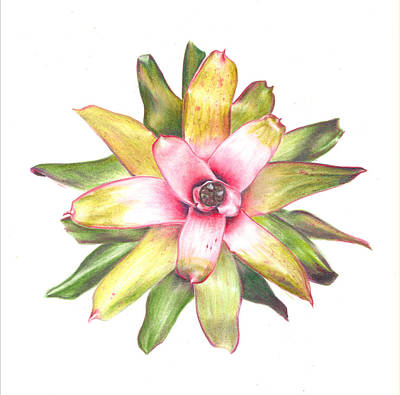 Neoregelia Painting - Andrea's Choice by Penrith Goff