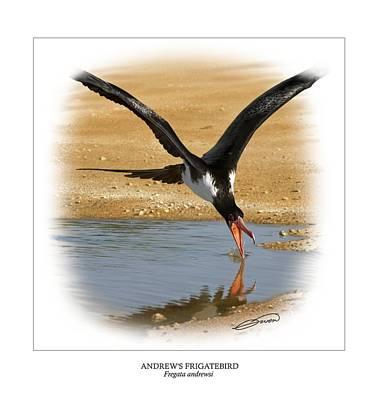 Andrews Frigatebird Fregata Andrewsi 4 Art Print by Owen Bell