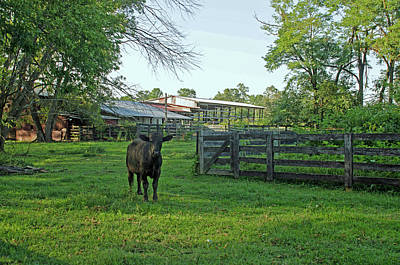Andrews Tavern Lone Cow Art Print by Dawn Whitmore