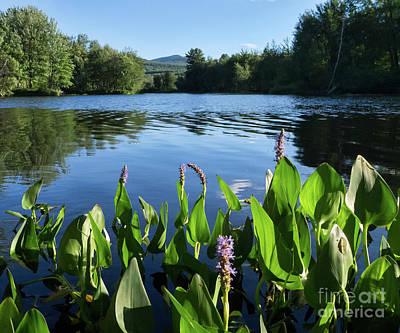 Photograph - Androscoggin River, Rumford, Maine #60659-60 by John Bald