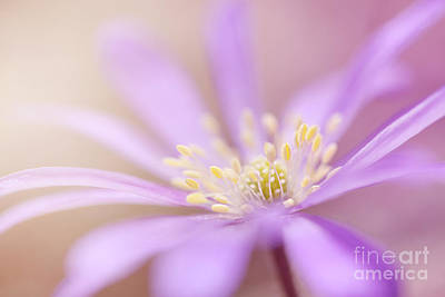 Hjbh Photograph - Anemone Blanda by LHJB Photography