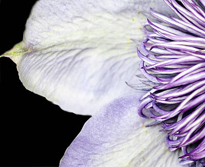 Photograph - Anemone Center Edge by Rebecca Cozart
