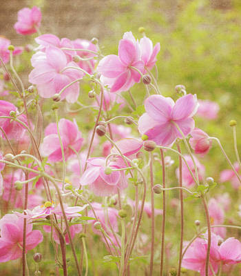 Photograph - Anemone Dance by Diane Fifield
