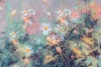 Photograph - Anemone Dreams by Cathy Donohoue