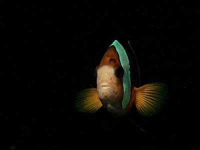 Photograph - Anemone Fish Portrait by Mau Riquelme