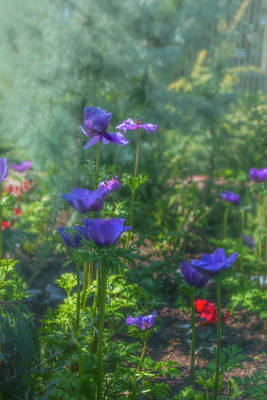 Photograph - Anemone Flowers In The Sun Garden by Jade Moon