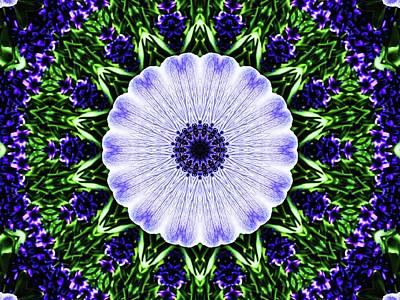 Photograph - Anemone Manipulation by Karen Stahlros