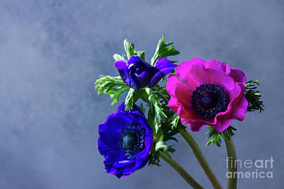 Photograph - Anemones Bouquet by Anastasy Yarmolovich