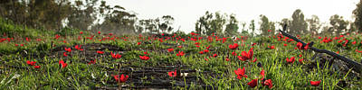 Art Print featuring the photograph Anemones Forest Panorama by Yoel Koskas