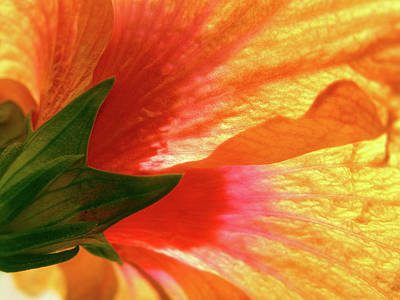 Photograph - Angel Brushstrokes  by Marie Hicks