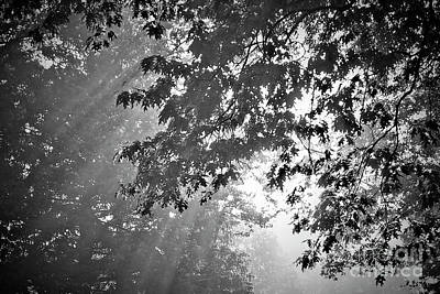 Photograph - Angel Fingers On A Misty Morning by Jenness Asby