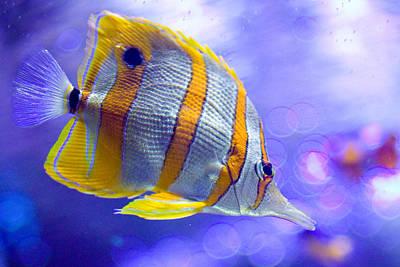 Clown Fish Photograph - Angel Fish by Carl Jackson