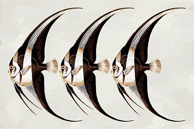 Mixed Media - Angel Fish In A Row Wall Art by Georgiana Romanovna