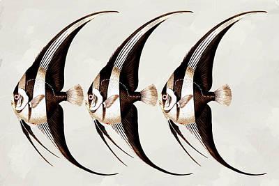 Row Mixed Media - Angel Fish In A Row Wall Art by Georgiana Romanovna
