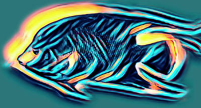 Photograph - Angel Fish In Turquoise Tones by Debra and Dave Vanderlaan