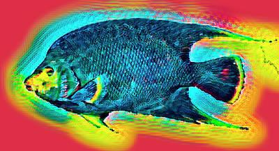 Photograph - Angel Fish Underwater Rainbow  by Debra and Dave Vanderlaan