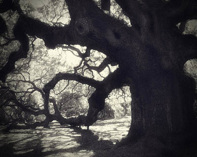 Angel Oak Photograph - Angel II by Amy Tyler