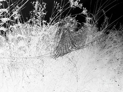 Photograph - Angel In Grasslands by Maria Urso