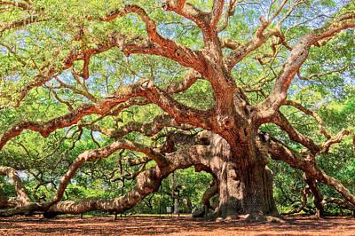 Angel Oak - Charleston Sc  Art Print