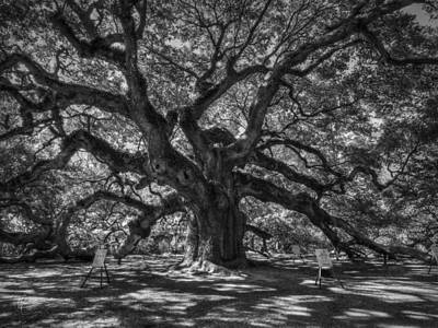 Photograph - Angel Oak 002 by Lance Vaughn