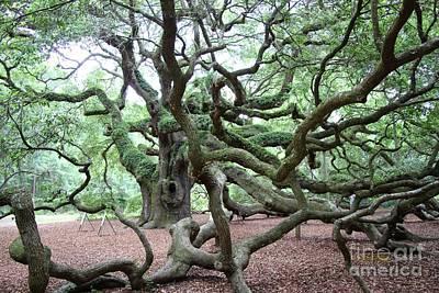 Photograph - Angel Oak 1 by Dodie Ulery
