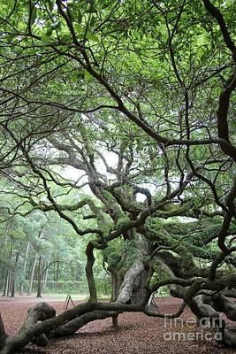 Photograph - Angel Oak 2 by Dodie Ulery