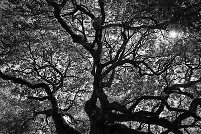 Photograph - Angel Oak Canopy by Dan Myers
