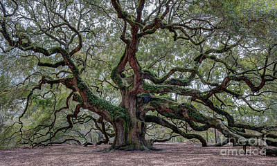 Photograph - Angel Oak Character And Patina by Dale Powell