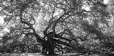 Photograph - Angel Oak by Dan Myers