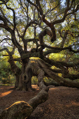 Photograph - Angel Oak  by Darylann Leonard Photography