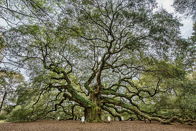 Photograph - Angel Oak by Erika Fawcett