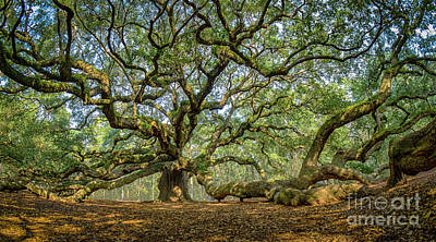 Photograph - Angel Oak - Fisheye by David Smith