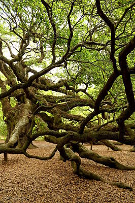 Photograph - Angel Oak by Greg Simmons