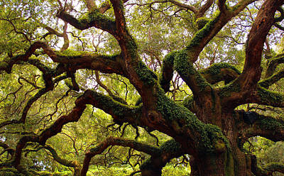 Photograph - World Tree II by Robin Street-Morris