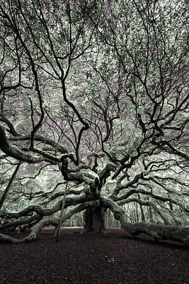 Large Oak Tree Photograph - Angel Oak In Infrared by Rick Berk