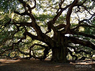1400 Year Old Tree Photograph - Angel Oak In November by Susanne Van Hulst