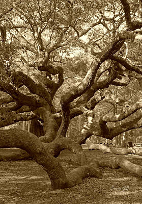 Angel Oak In Sepia Art Print by Suzanne Gaff