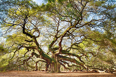 Angel Oak In Spring Art Print