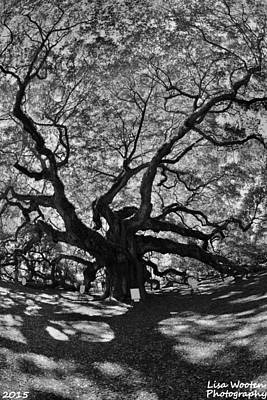 Photograph - Angel Oak Johns Island Black And White by Lisa Wooten