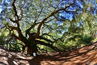 Photograph - Angel Oak Johns Island S C by Lisa Wooten