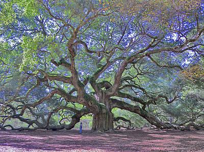 Angel Oak, John's Island, Sc Art Print by Garry Turpin