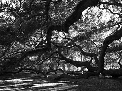 1400 Year Old Tree Photograph - Angel Oak Limbs Bw by Susanne Van Hulst