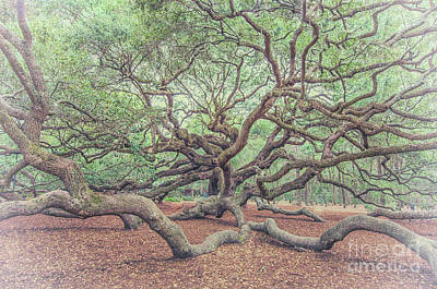 Photograph - Angel Oak Limbs by Dale Powell