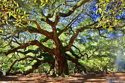 Photograph - Angel Oak by Lisa Wooten